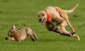 thumb_Bạn là chú chó hay chú thỏ